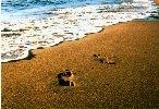 Sand Prints by Melanie Ehrenreich